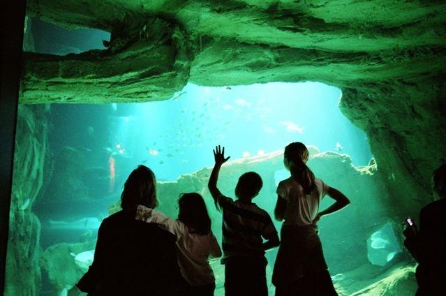 Aquarium Paris Club Related Keywords & Suggestions - Aquarium Paris ...