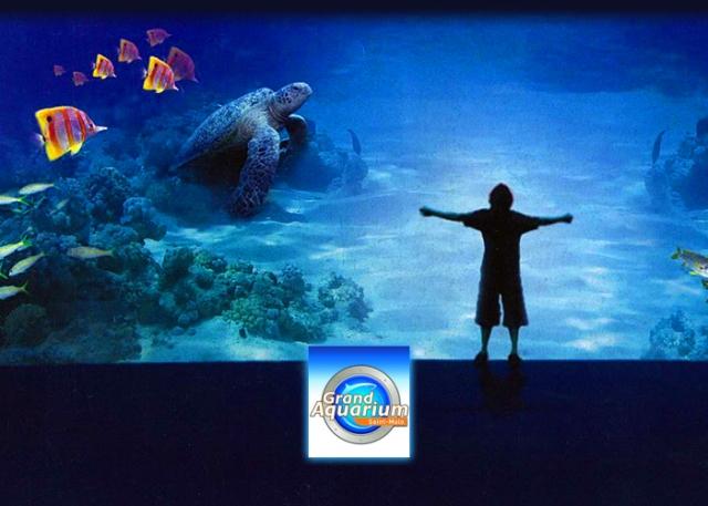 Grand aquarium de saint malo club butterfly for Achat grand aquarium
